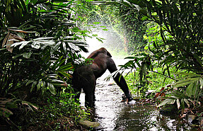 5 day uganda flying safari bwindi gorilla park and murchison falls national park